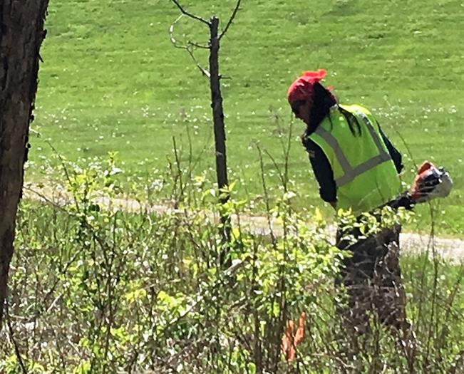 Crews slaying invasive plants along Licking River trail